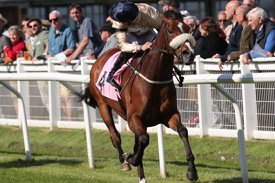 WILD HOPE Trained by Kevin Ryan for Hambleton Racing