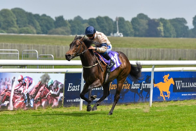 Country Carnival and Shane Gray win the tote Placepot Your First Bet Of The Day Novice Auction Stakes (Plus 10 Race) at Beverley 170620