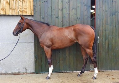 Holy Roman Emperor filly July